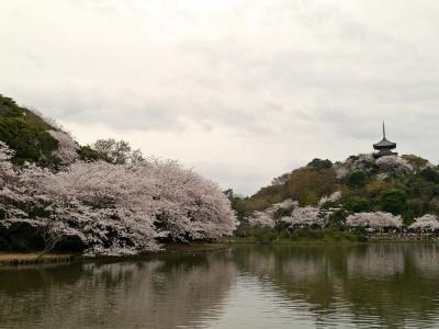 ソメイヨシノを中心にさまざまな花が楽しめる、春の三溪園(2014年4月2日撮影)