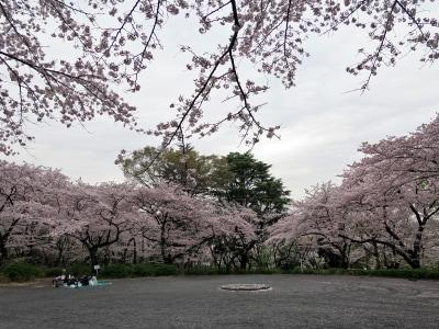 サッカー観戦などと一緒にお花見も楽しめる三ツ沢公園(2016年4月5日撮影)