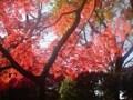 旧古河庭園、六義園を堪能する紅葉散歩コースin駒込