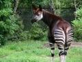 横浜には動物園が3つある! 入園無料の動物園も!?