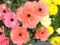 花をめぐる旅!宮崎産の花おすすめベスト3
