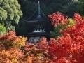紅葉の季節の京都・東山 永観堂から哲学の道へ