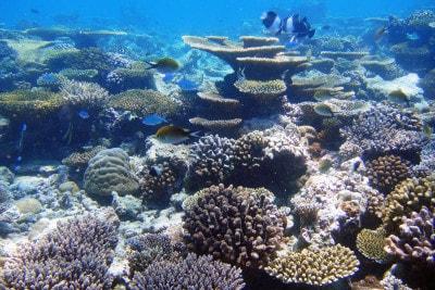 サンゴに優しい日焼け止め