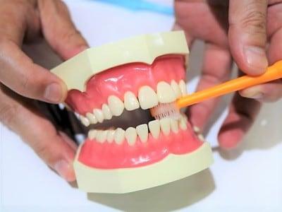 歯周病予防にもお勧めしたいタンポポの種歯ブラシ。