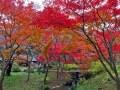 横浜の紅葉スポット「三溪園」2017年の見頃や楽しみ方